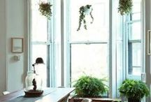 Research // Indoor Plants / Keywords: how to, DIY, ceramics, types of plants, interior design, green living, herbs, living room, kitchen, terrarium, products, glass, greenhouses / by Joan Stoltman
