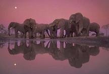 Elephants / by Michael Lassell