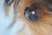A Crystal of Snow / by Lynette Lamblez