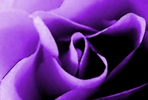 Passion Purple / by Leslie Keeslar