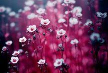 自然  FLOWERS ✿ / by Absolem Wimp