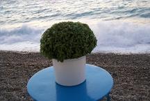 Greece:Flavours&Tastes / by Anko Being Anko