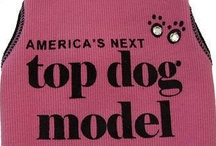 Dog Fashion / by Puppies For Sale Site.com