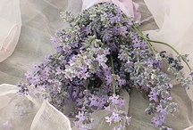 ✿⊱Lavender / I love Lavender...whether it's the plant, the color or the scent! / by Marja Schwedler