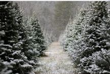 Christmas & Winter / by Beth Dunsmoor