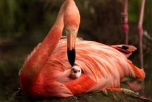 PRETTY FLAMINGO! / by ZSA ZSA