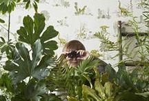 Plants, man / by Erica Parrott