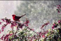 Simply Spring / by wunderground.com