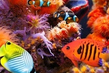 Under the Sea / by wunderground.com