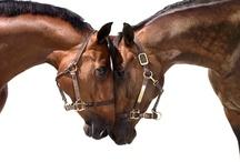 Horses / by TS