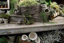 garden continues / by Jana Dezeeuw