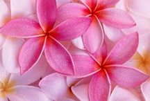 Flowers! / by Jennifer Beaton