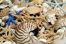 beach/shells / by Karen Klingenberg