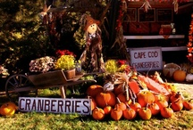 Fall Favorites / by Cape Cod Potato Chips