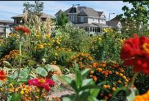 Stapleton Garden Patch / Stapleton gardens and more... / by StapletonDenver