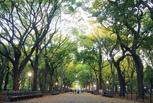 Anderson's Must-See NYC Tourist Spots / by Anderson Live