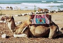 "DESTINATION:  MORROCO / Come with me to the far west, or ""where the sun sets"" in lovely Morocco!  With its' generous hospitality, richness in culture, beautiful beaches, festive culinary delights, and handcrafted pottery, carpets, and kaftans, Morocco is a dream vacation come true! / by Kristine Marie"