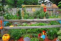 Garden / Garden, gardening, vegetable garden, garden decorations, do it yourself DIY, tips, and ideas / by Tayster A. Louise