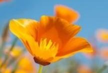 Gardens & Farms / by Sierra Club