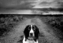 Dawgs / by Gerrie Swartz