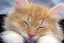 Kitties / by Amanda Ward