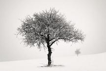 Peaceful White / by Amanda Ward