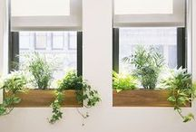 Window Boxes / The traditional and the unexpected in window box design.  / by The Sill