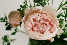 Flora / Pretty things for the garden / by Jess Olver