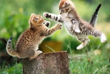 Cats are little stuffed animals come to life   / I love Cats / by Jina