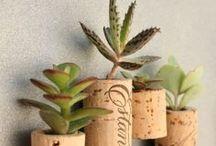 Gardening: House Plants / by Sharon Raine