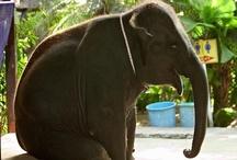 ELEPHANTS = <3 / by Joan Woodbrey Crocker