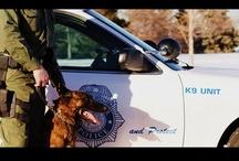 K-9 / by Denver Police