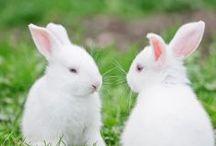 Easter ideas 2 / by Nancy Meierotto