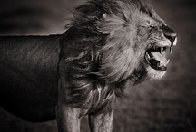 Animals / by Pish PoshBlog