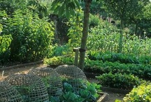 Garden  / by Tina Williams