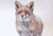 cause i love foxes / by Dawn Hall