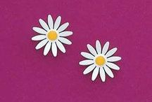 Daisies / Wear or give daisies to friends and family! / by AmeriMark®