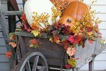 Autumn Decor / by Nikki Wallace