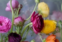 Les Belles Jardins ..... / by Tisha Hudson
