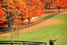 My Old Kentucky Home / by Mary Councill