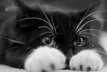 Feline fine ... <3 / by Tisha Hudson