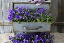 Porch/container gardening / by Amy Shea