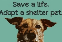 Every Dog Has Its Day / by Mary Littleton
