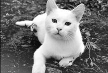 White Cats (shhh) / by Mi Lena OA