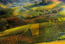 Wine : Travels / places discovered in pursuit of the grape / by Leah Lenz