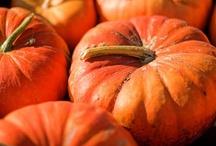 Ingredient : Pumpkin / by Leah Lenz