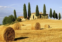 The Rest of Tuscany / by Angela Allyn
