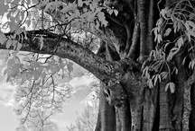 Trees / by Melody LaCuesta