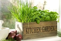Vegetable/Fruit Gardening / by Sara Zaugg