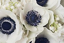 Flower Addiction / by Sara Zaugg
